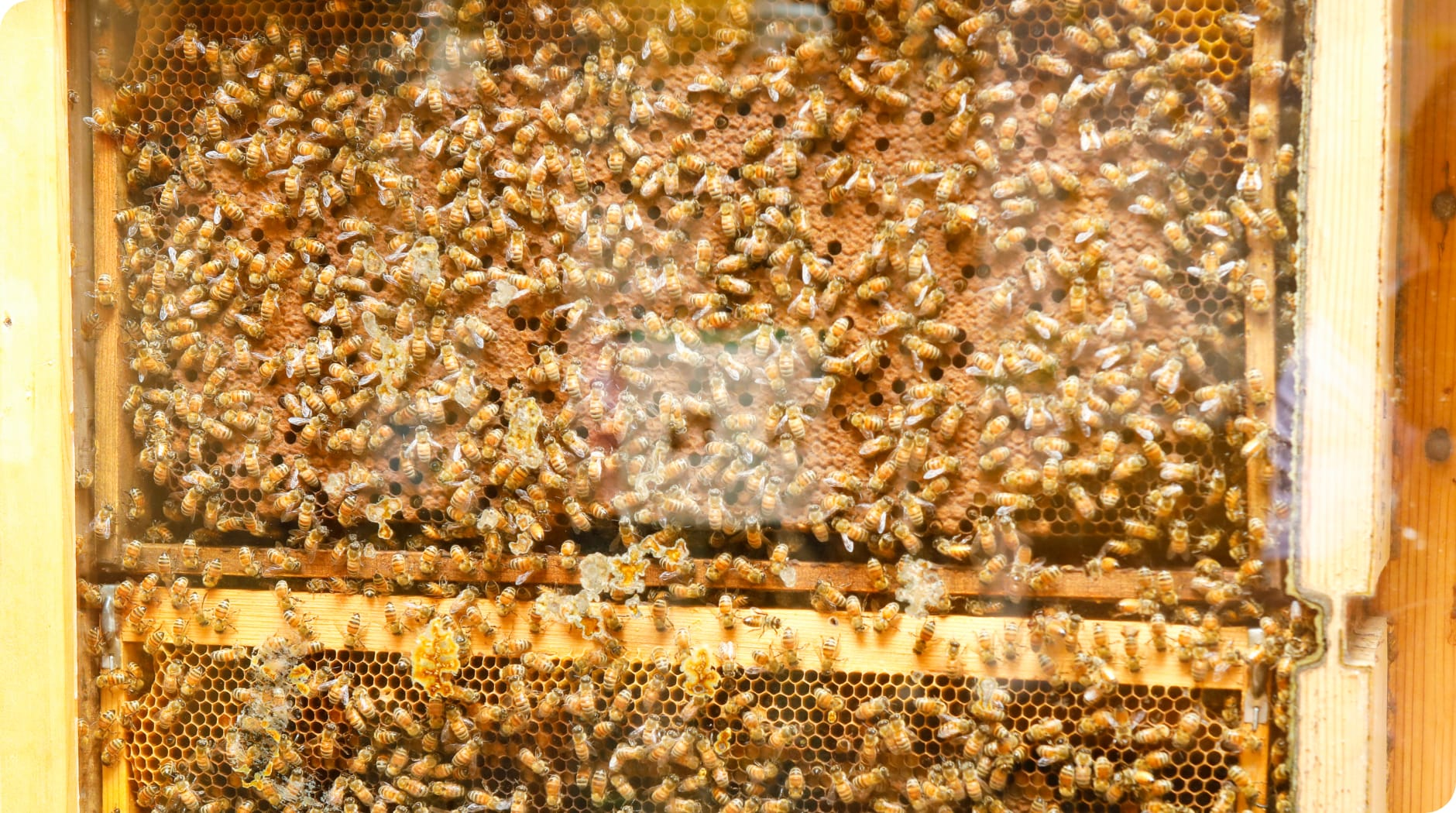 新垣養蜂園