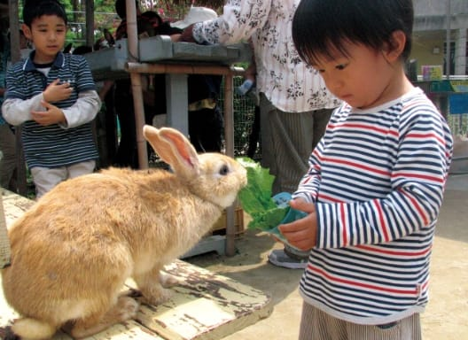 充滿琉球群島的有趣動物